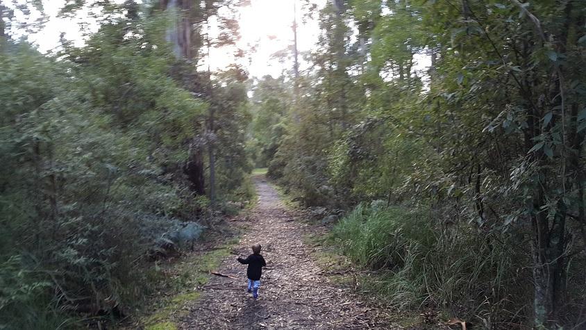 Walking through Morwell National Park